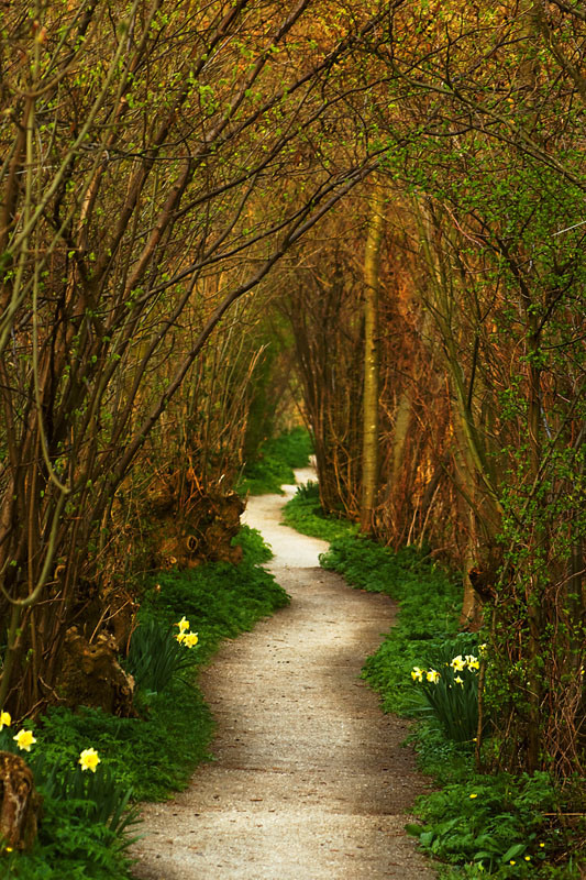 THE WINDING PATH, LEIDEN, NETHERLANDS