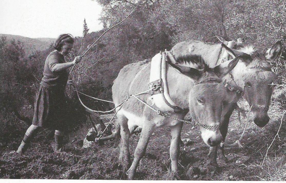 Η Σπυριδούλα οργώνει στο Νικολή (1969)