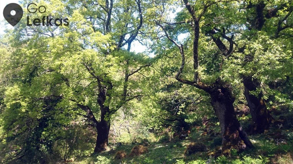 Άποψη του δάσους των Σκάρων