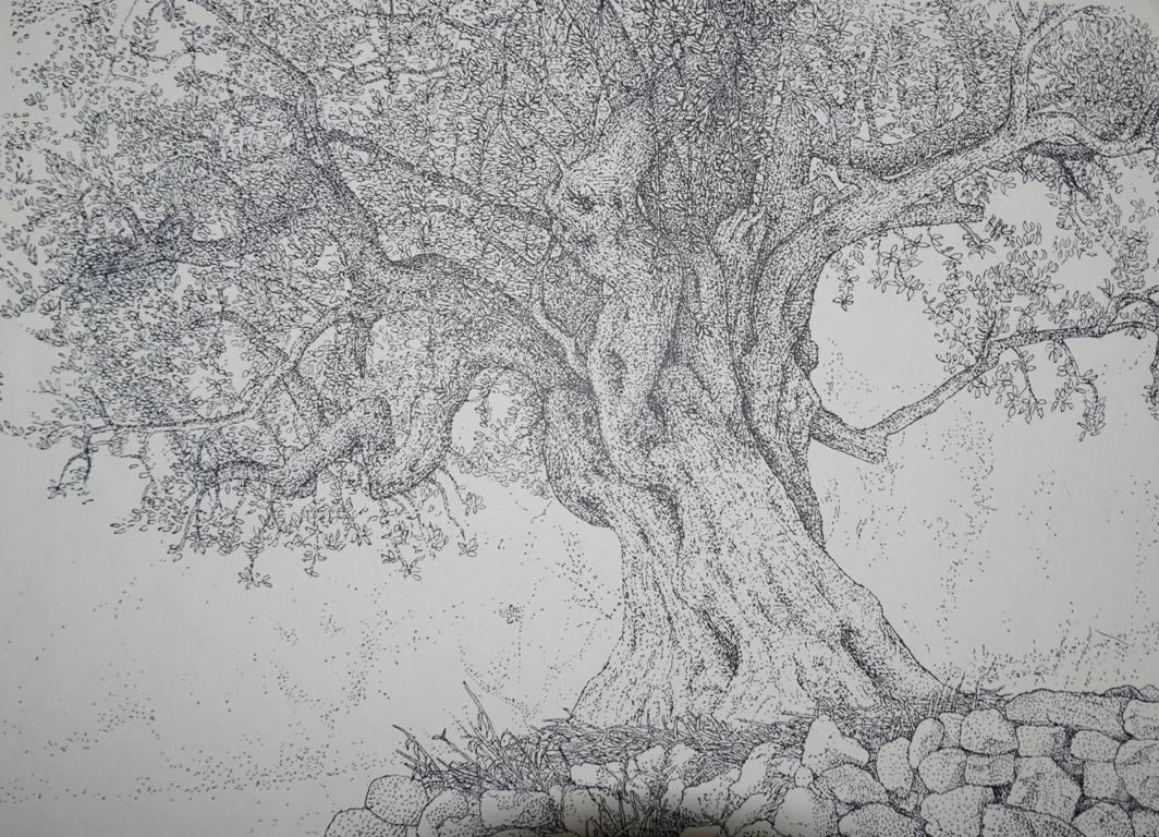 Ελαιόδεντρο: σφηνωμένο στο έδαφος με τις ρίζες του στέρεα στη γη.