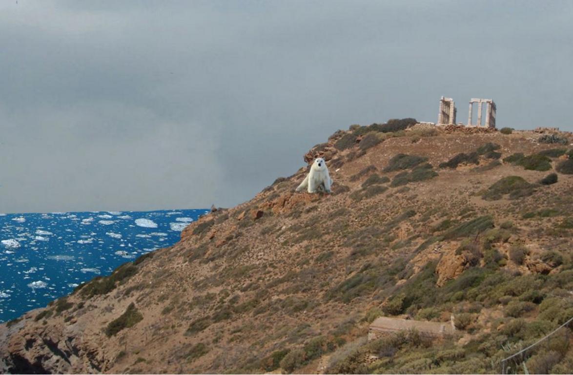 Η φιλική πολική αρκούδα που αποφάσισε να μεταναστεύσει από τον βόρειο πόλο σε ψυχρότερα πολικά κλίματα